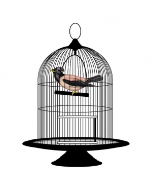 bocc bird in cage