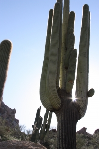 picture of a cactus