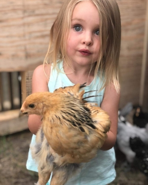 a chicken named June