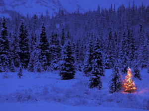 Picture of a Christmas tree in a forest