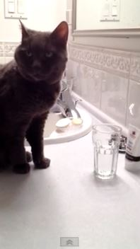 Opal The Cat Drinks from a Glass
