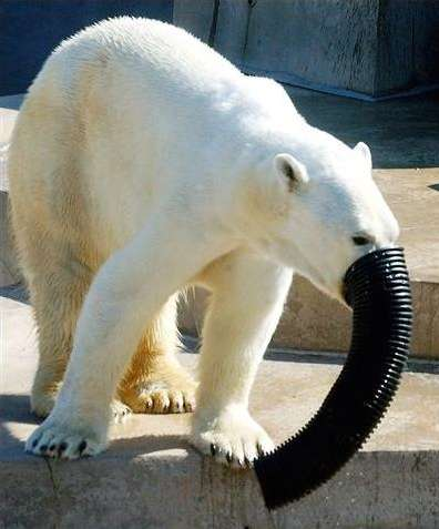 Funny Pictures of Polar Bear Elephant