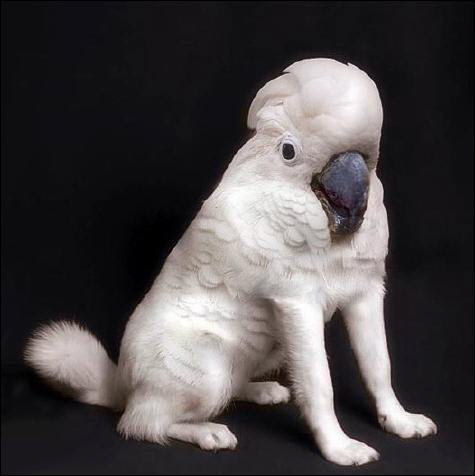 Funny Pictures of Bird Dog