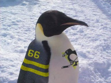 Funny Pictures of Pittsburgh Penguin Hockey Bird Fan