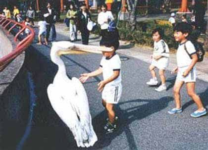 Funny Pictures of Stork With Kid In Beak