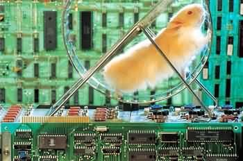 Funny Pictures of Hamster on Wheel in Computer
