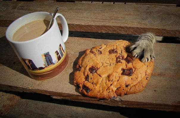cat cookie thief