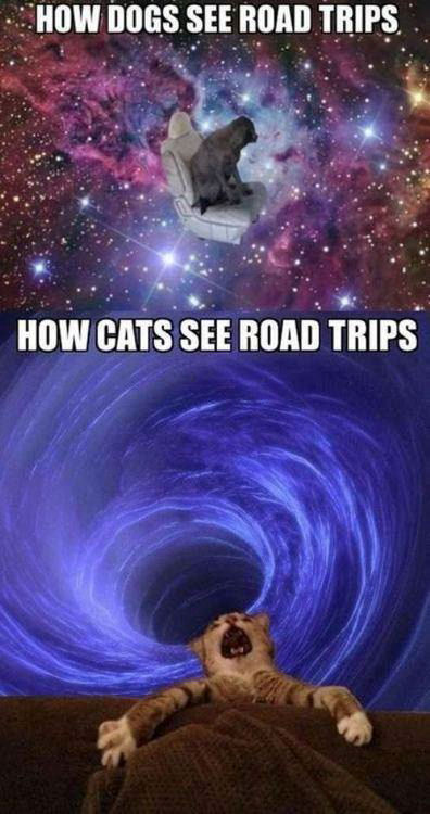 cat vs dog road trips