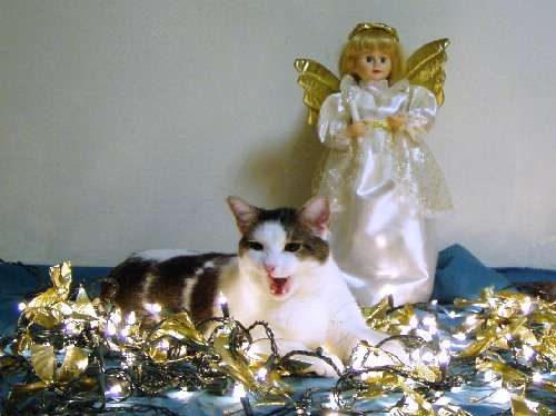 Funny Pictures of Gizmo Cat In Front of Christmas Angel