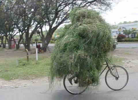 Funny Pictures of Bicycle Guy covered in grass.