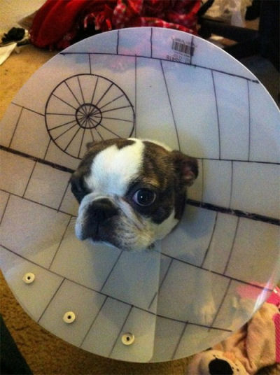 picture of a dog death star