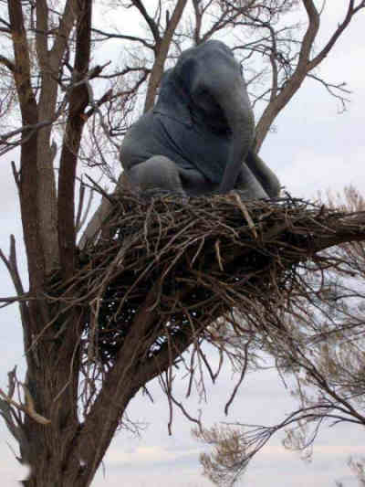 Funny Pictures of Elephant In a Nest Up a Tree