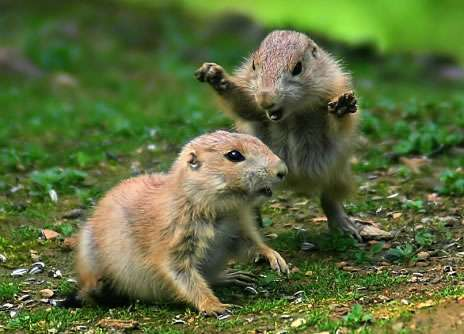 Funny Pictures of Small Animals Fighting