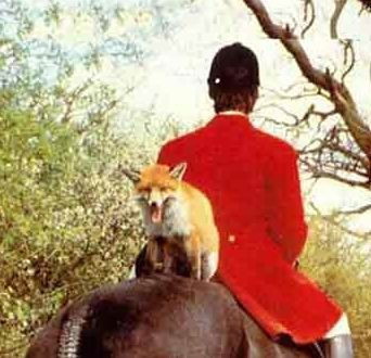 Funny Pictures of Fox On Back Of Horse Back in Hunt