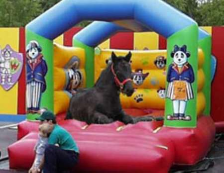 Funny Pictures of a horse lying in an inflatable castle