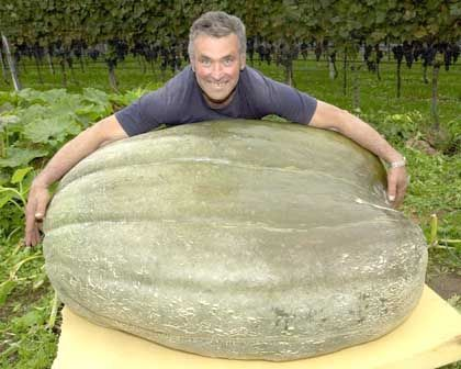 Funny Pictures of Man With Large Gourd
