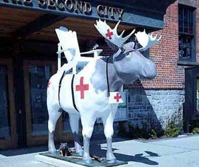 Funny Pictures of Red Cross Moose