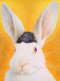 Funny Pictures of Rabbit with Hair Piece