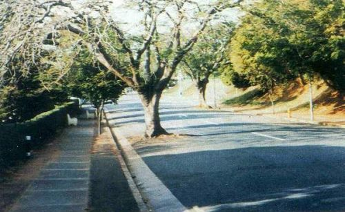 Funny Pictures of Tree In Middle Of Road