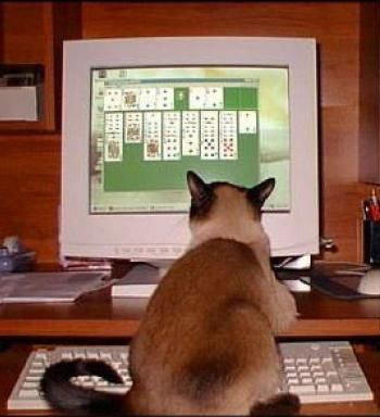 Funny Cat Pictures -  Playing Solitaire on Computer