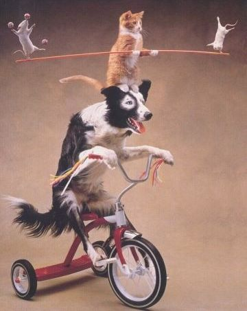 Funny Pictures of a cat, dog, and mice doing tricks.