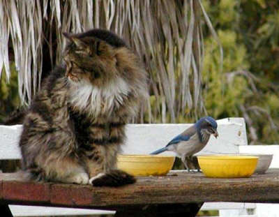 Funny Cat Pictures -  Eating With Bird
