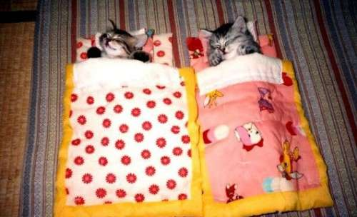 Funny Pictures of Kittens in Sleeping Bags