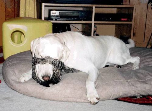 Funny Cat Pictures - and Dog Play Fighting