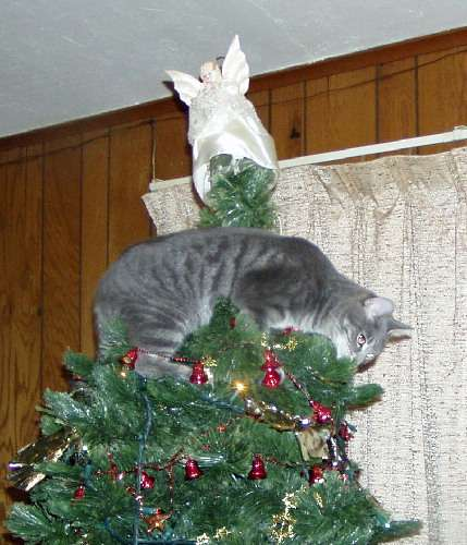 Funny Cat Pictures -  In Christmas Tree