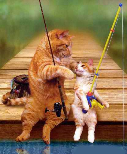 Funny Cat Pictures - s Fishing