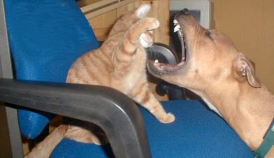 Funny Cat Pictures -  Dentist