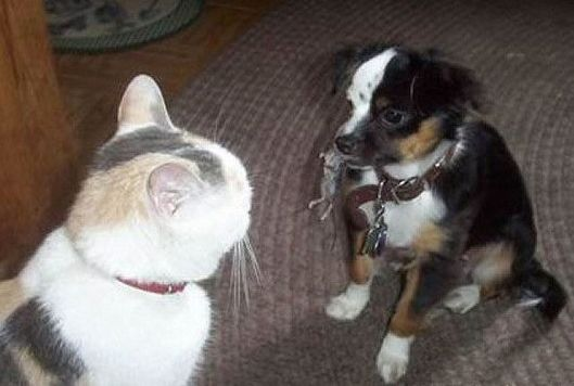 Funny Cat Pictures -  and Dog With Mouse in Mouth