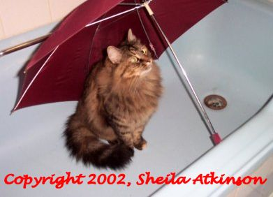 Funny Cat Pictures -  Under Umbrella in Tub
