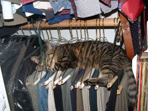 Funny Cat Pictures -  Sleeping In Clothes Hangers