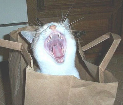 Funny Cat Pictures -  Yawning in Bag