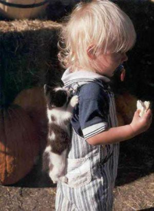 Funny Pictures of Kitten Hanging on Toddler