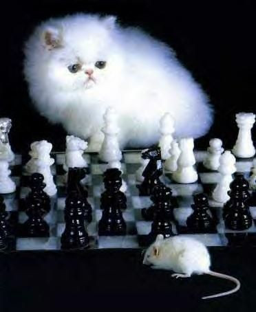 Funny Cat Pictures -  and Mouse Playing Chess