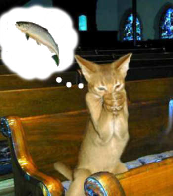 Funny Cat Pictures -  Praying for Fish