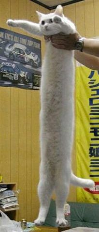 Funny Pictures of Stretched Cat