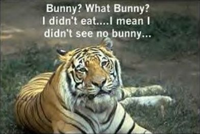 Funny Pictures of Tiger Lying About Bunny