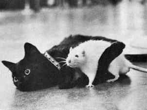 Funny Cat Pictures -  Hugging Rat