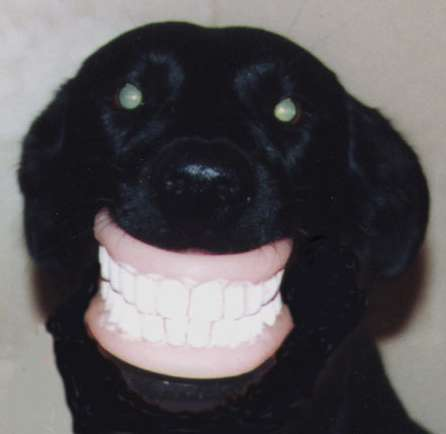 Funny Pictures of Dog With Dentures in Mouth
