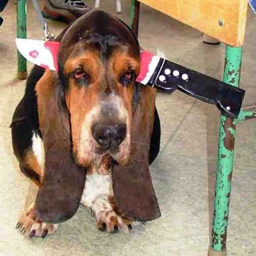 Funny Pictures of Dog With Knife In Head