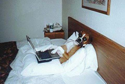 Funny Jokes Picture of Dog In Bed With Laptop