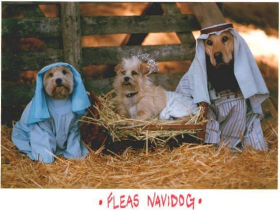 Funny Picture of Dogs in Christmas Manger Scene