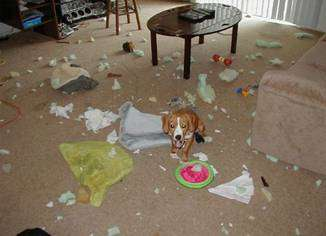 Funny Pictures of Dog In Ruined Room