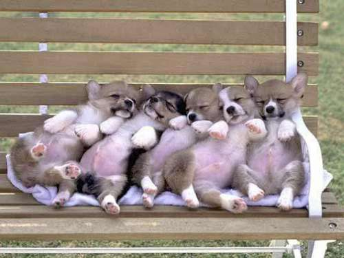 Funny Pictures of Puppy's Sleeping On Park Bench