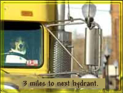 Funny Jokes Pictures of Dog Driving a Transport Truck