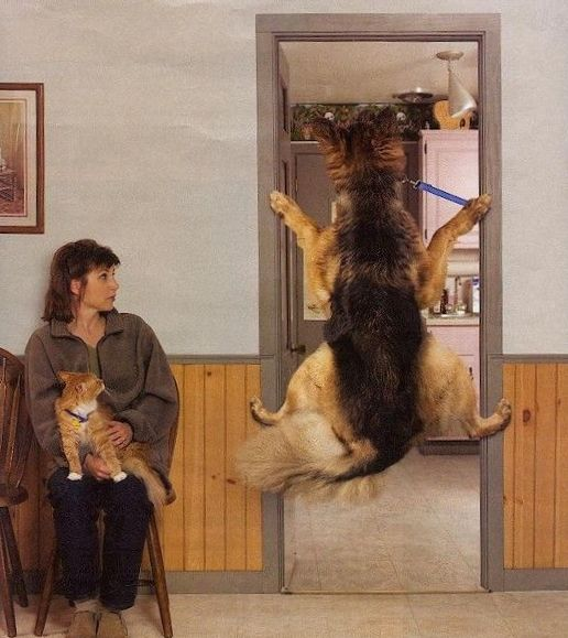 Funny Pictures of Dog Avoiding Vet Visit